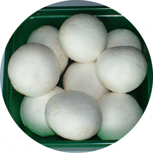 White button Mushroom for Air-shipment
